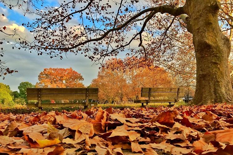 Los versos más románticos de este otoño