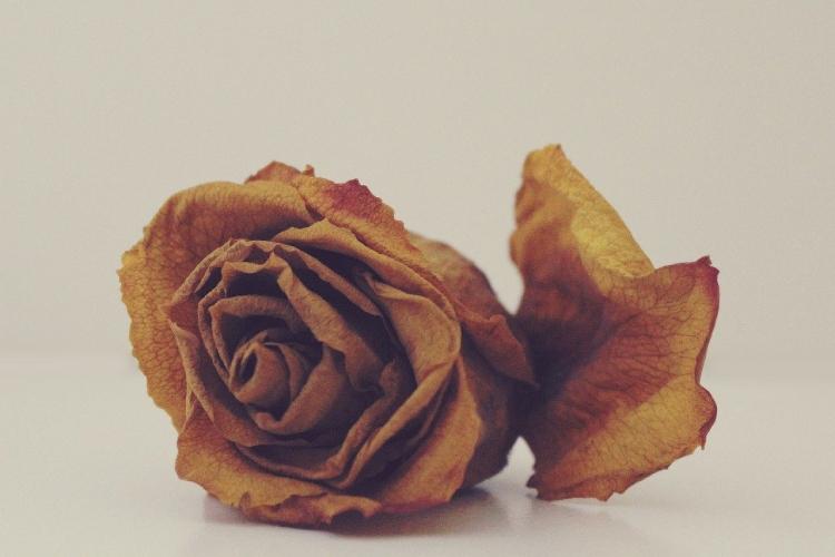 Paco Sánchez presenta su nuevo relato 'Una rosa entre los escombros'